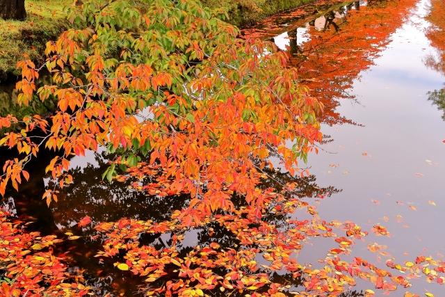 秋 の 訪れ を 知る 一葉